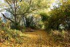 Herbst im Auwald
