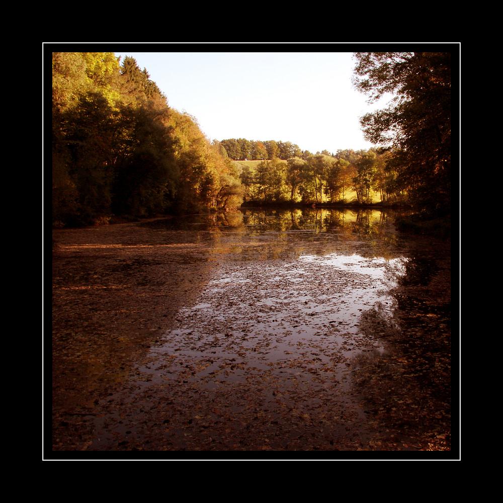 Herbst im Bergener Moos II