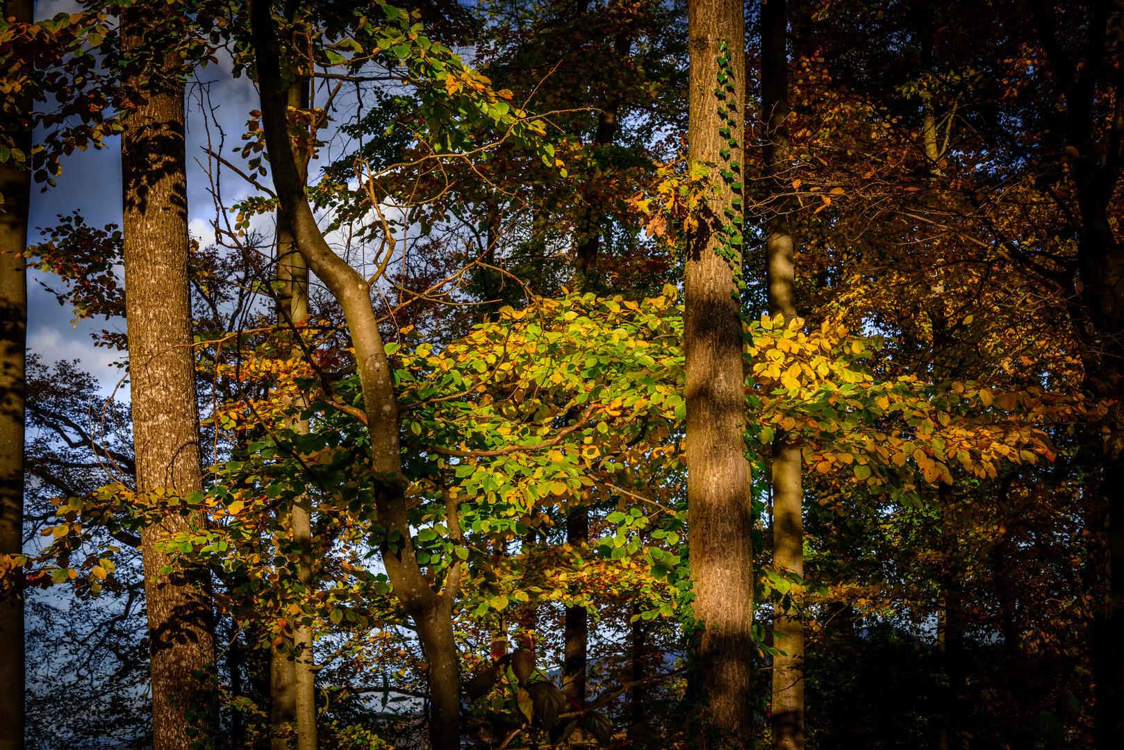 Herbst im Blätterwald
