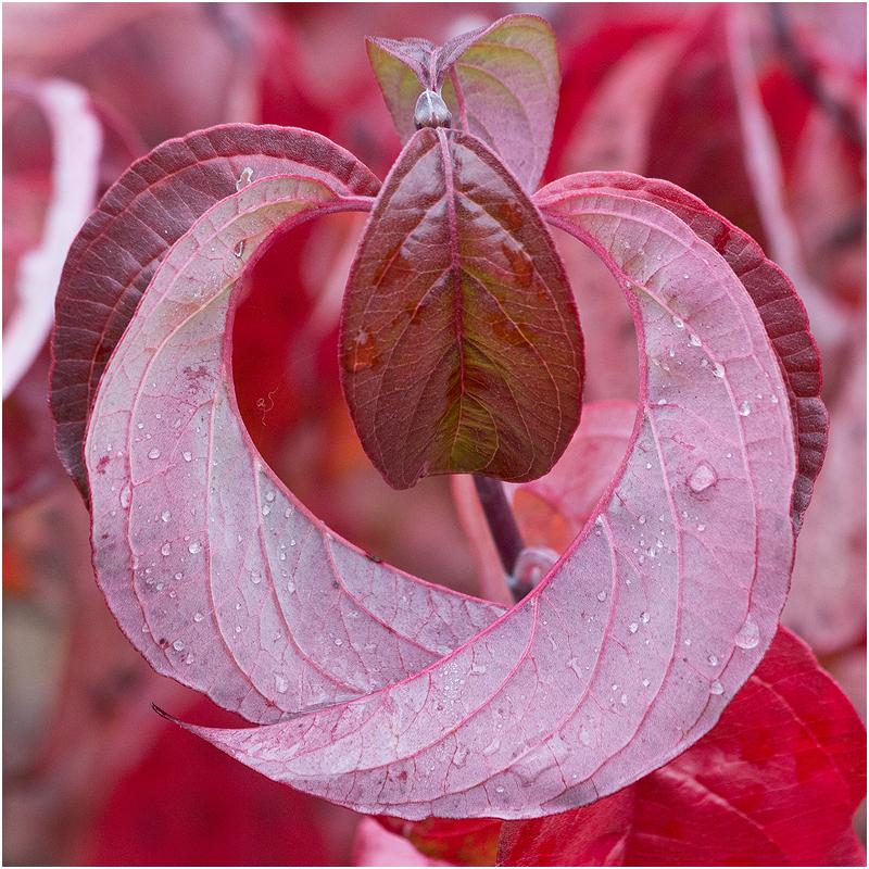 Herbst im Botanischen Garten I