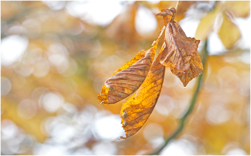 Herbst im Botanischen Garten V