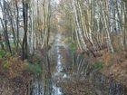Herbst im Bourtanger Moor