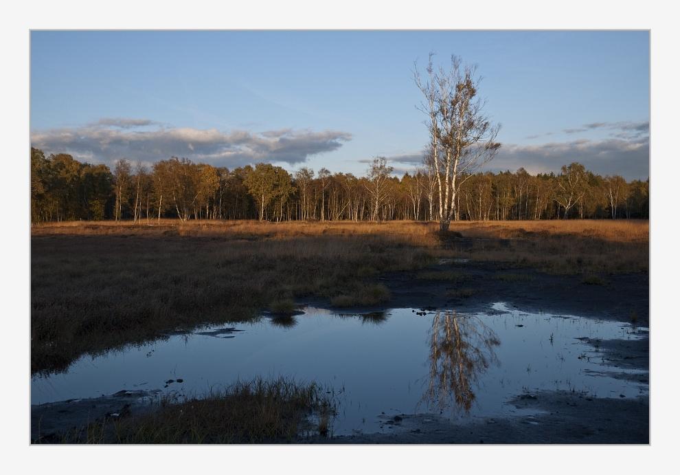 Herbst im Brook...