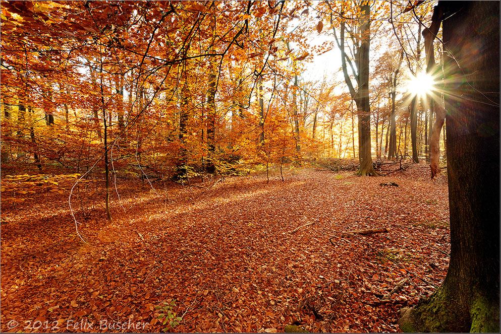 Herbst im Buchenwald (2)