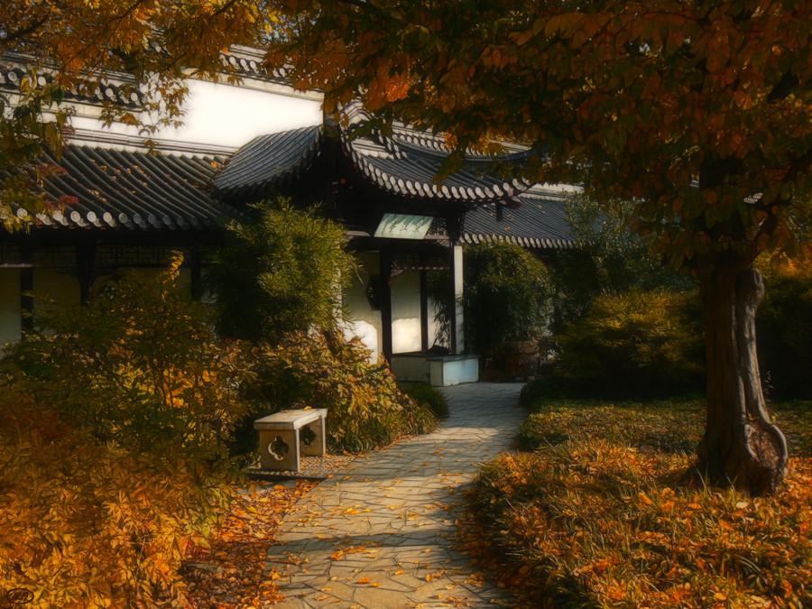 Herbst im chinesischen Garten (14)