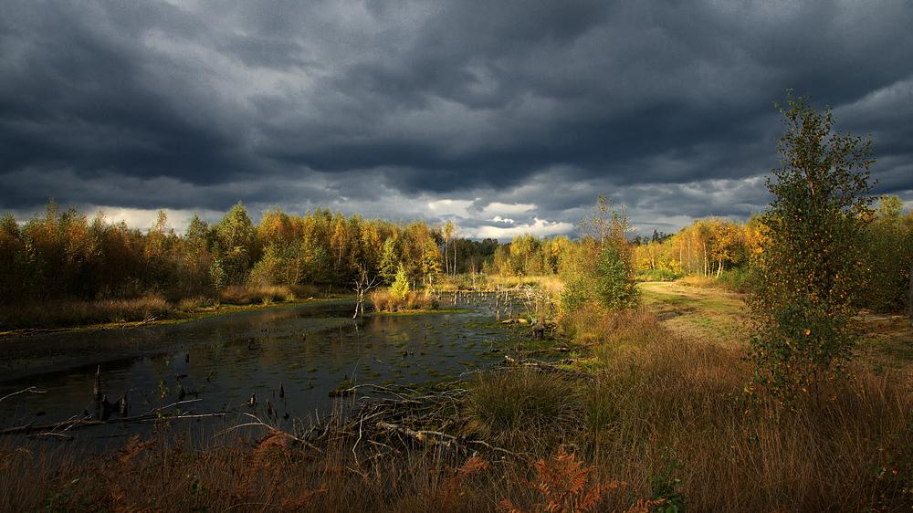 Herbst im Diepholzer Moor 2