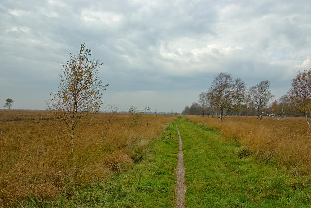 Herbst im Dosenmoor