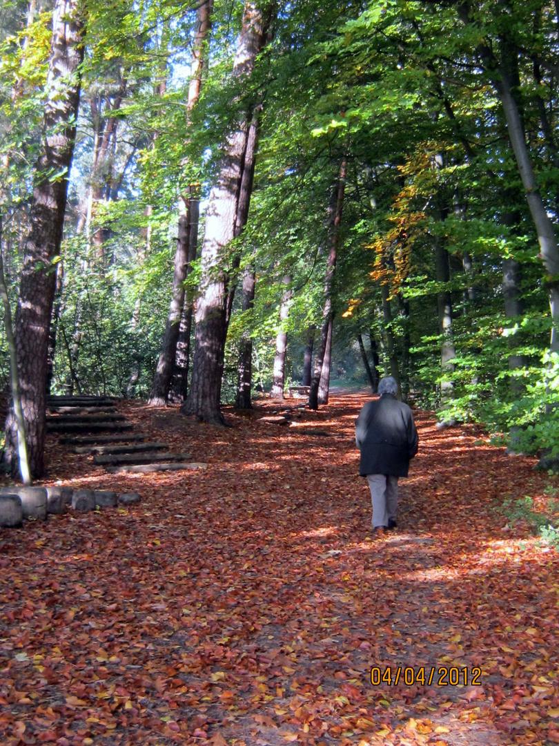 Herbst im Dudenhofener Wald