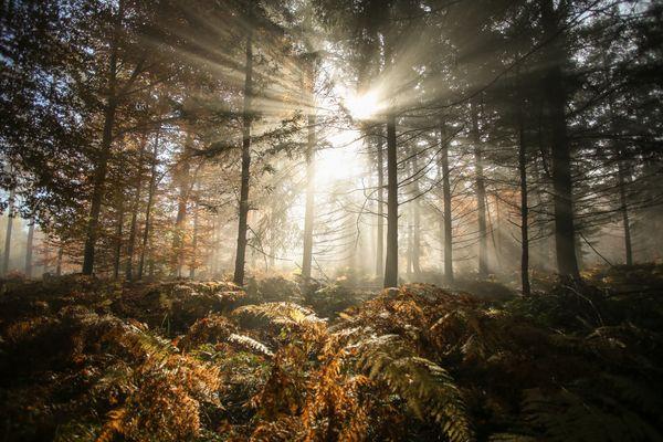 Herbst im Farnwald