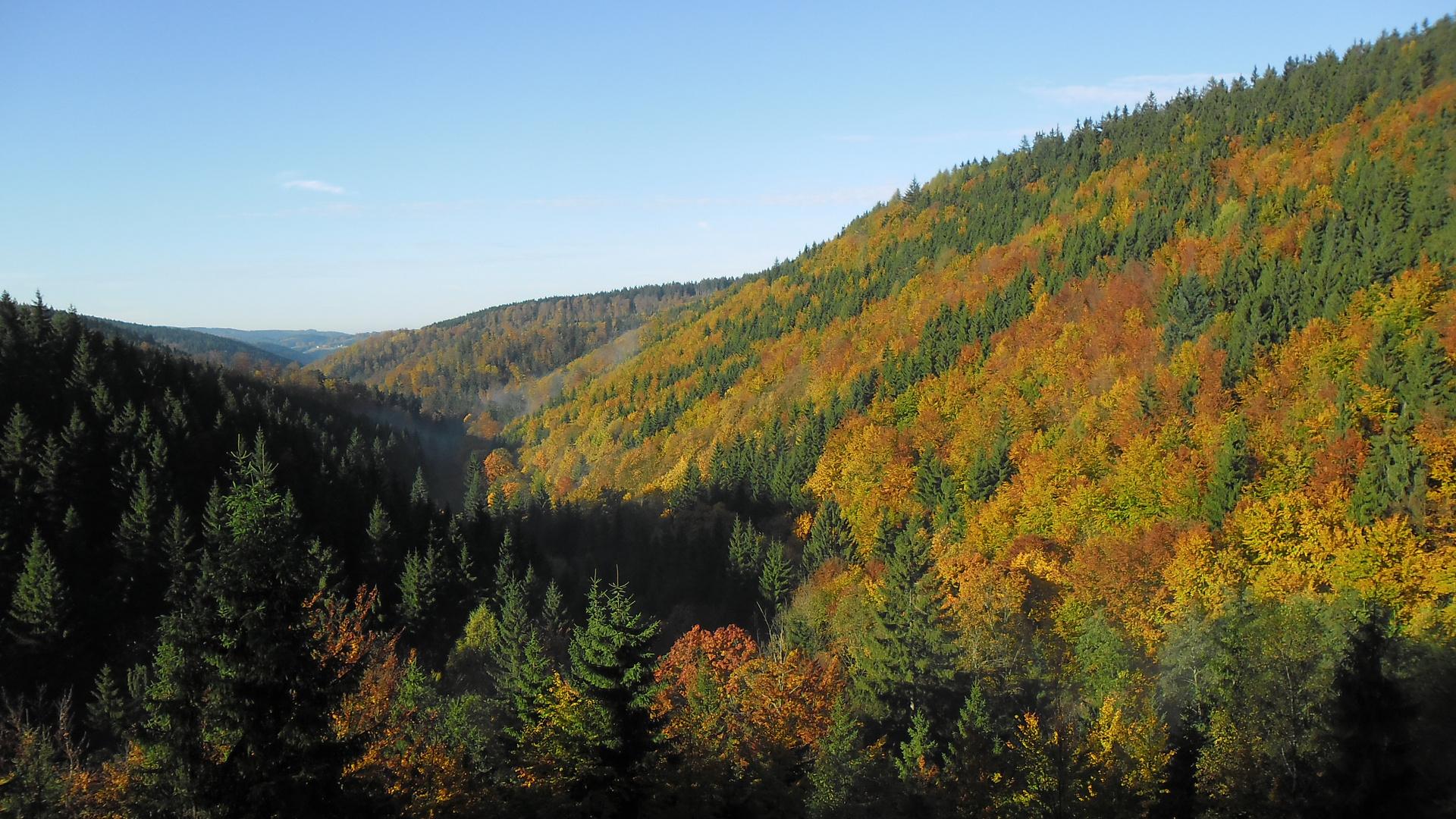 Herbst im Frankenwald