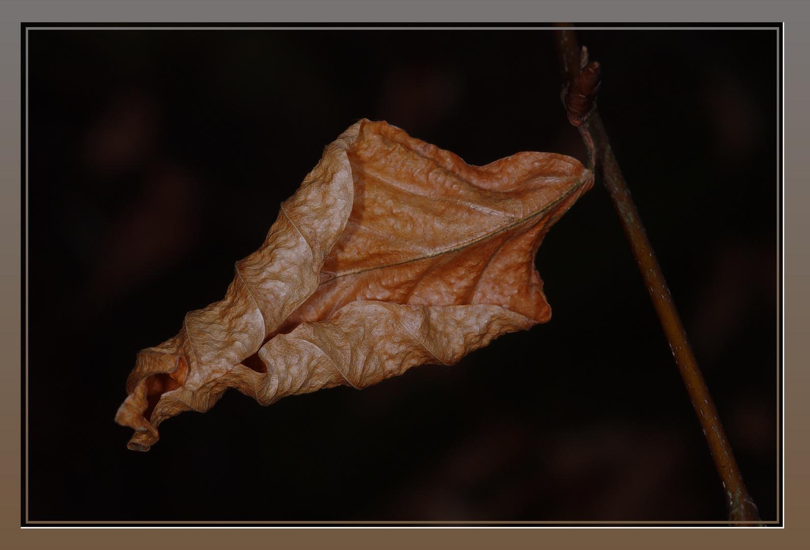Herbst im Frühjahr
