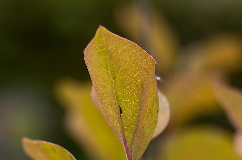 Herbst im Garten 2