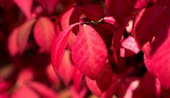 Herbst im Garten 3