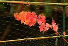 Herbst im Garten