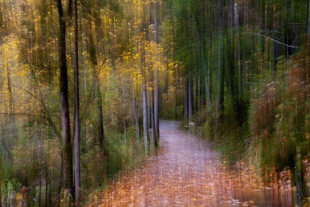Herbst im Geisterwald