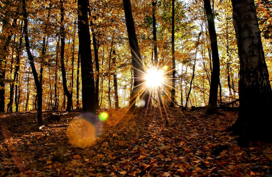 Herbst im Grafenberger Wald 2 Düsseldorf