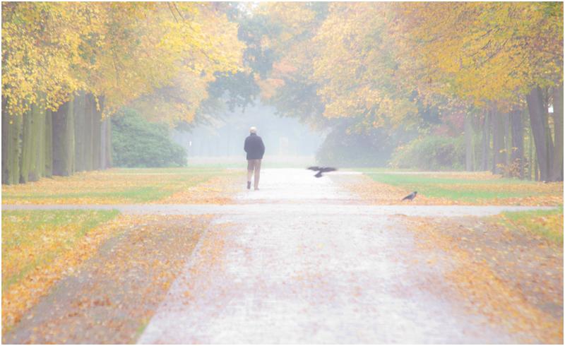 Herbst im Großen Garten II