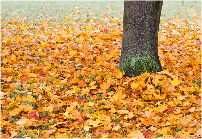 Herbst im Großen Garten III