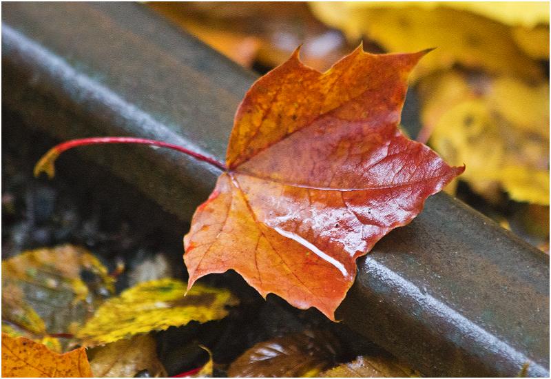 Herbst im Großen Garten IV
