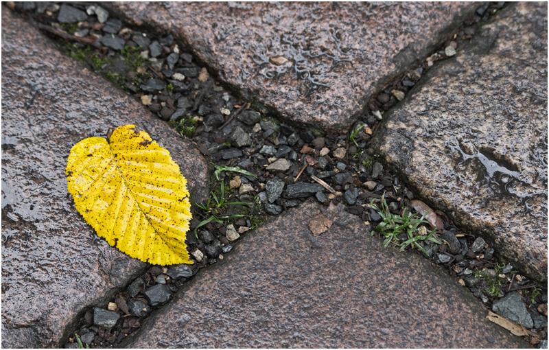 Herbst im Großen Garten VI