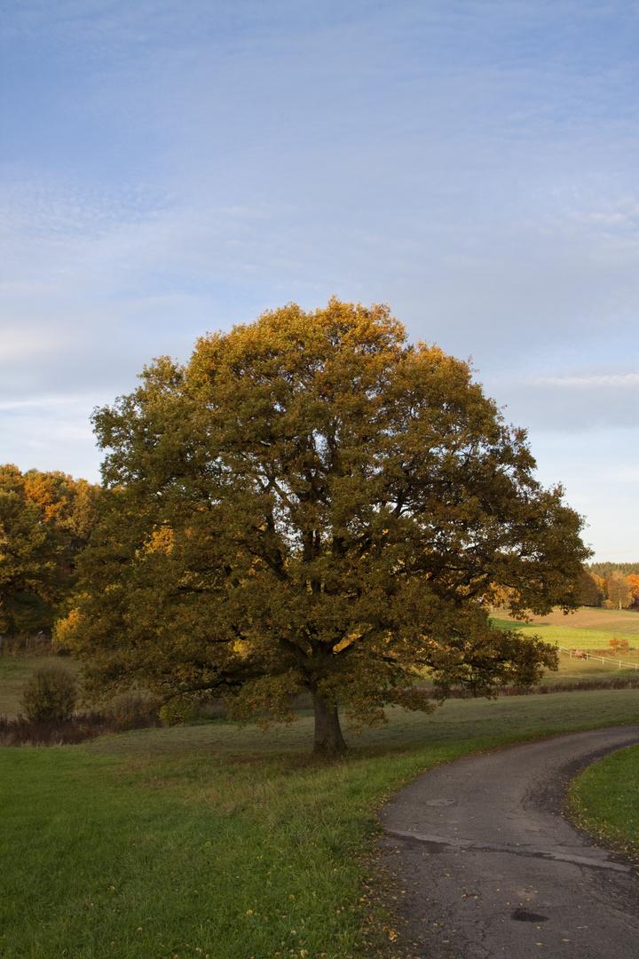Herbst im Heestal