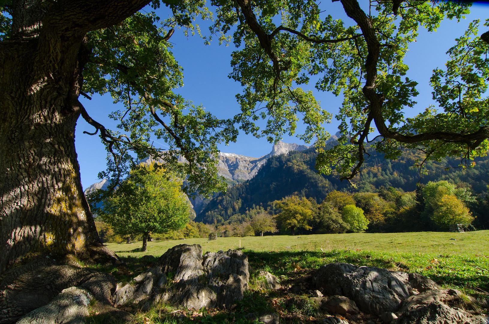 Herbst im Heidiland