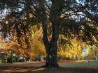 Herbst im Hessepark