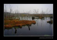 Herbst im Himmelmoor - 5