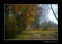 Herbst im Himmelmoor - 7