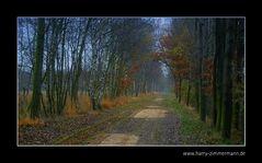 Herbst im Himmelmoor - 8