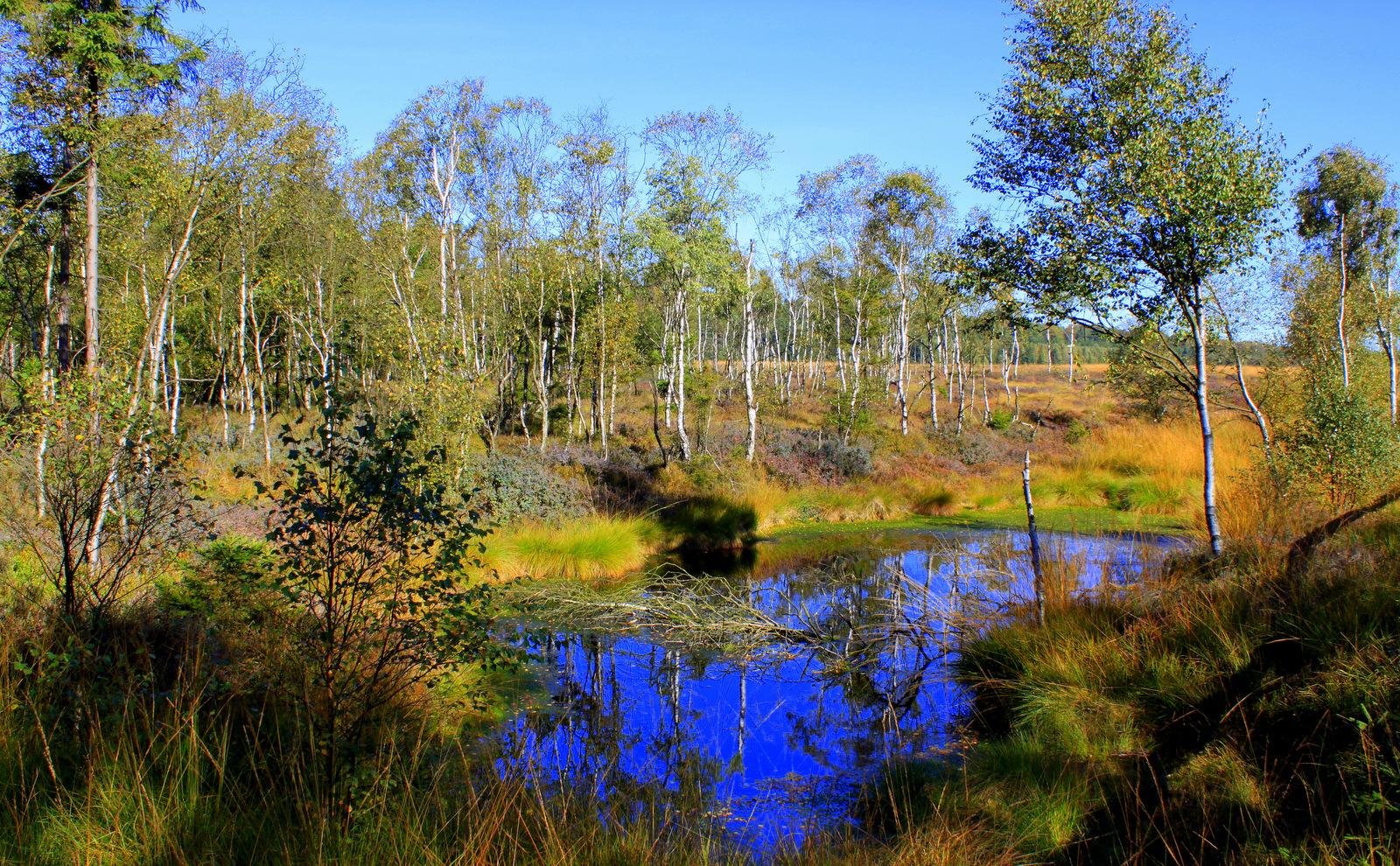 -Herbst im Hochmoor-