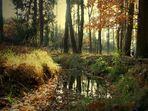 Herbst im Hohen Fläming