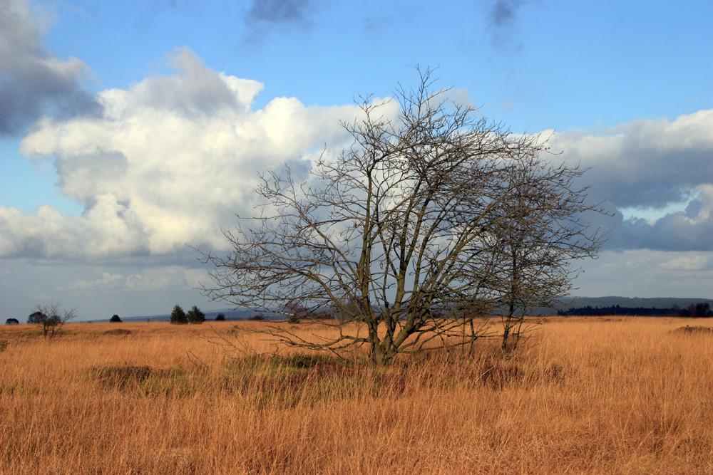 Herbst im hohen Venn
