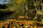 Herbst im Ilsetal