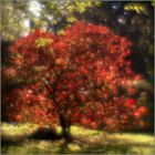 Herbst im japanische Garten. #1