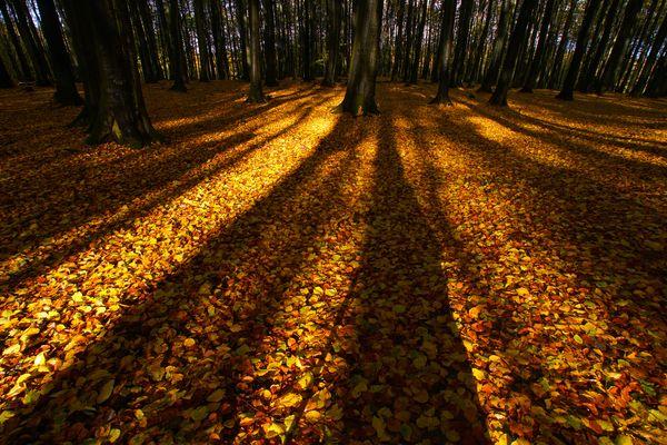 Herbst im Jasmund