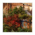 Herbst im Jungbusch