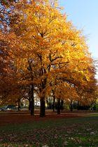 Herbst im Kantpark 01