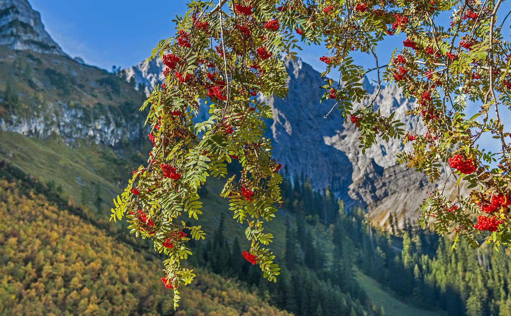 Herbst im Karwendel Gebirge
