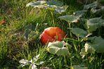 Herbst im Kleingarten