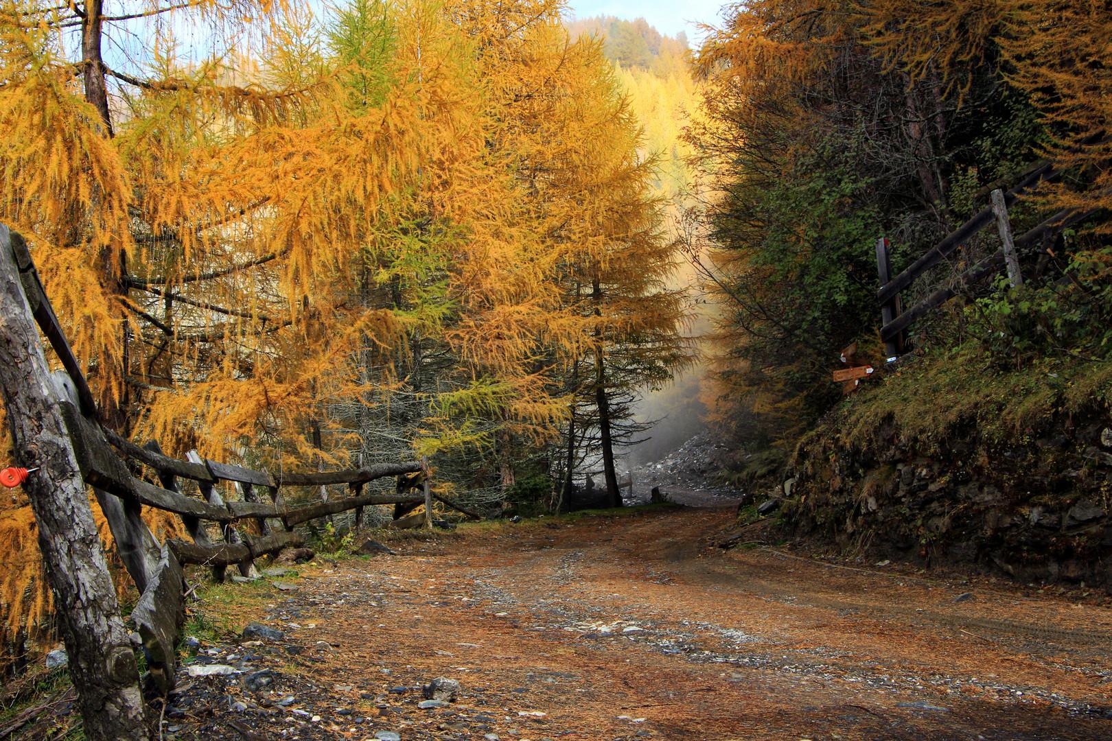 Herbst im Lärchenwald