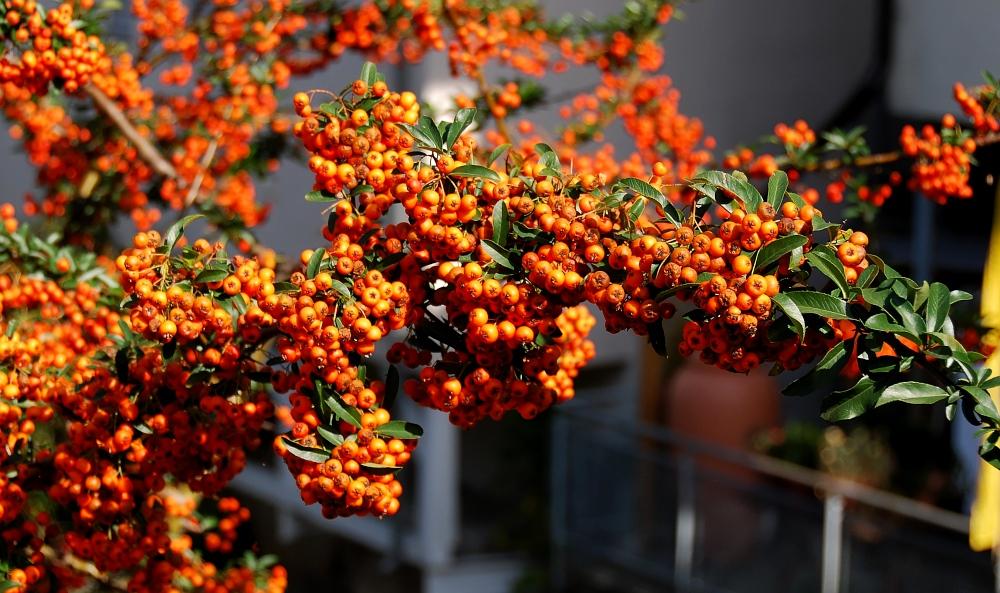 Herbst im Lande...