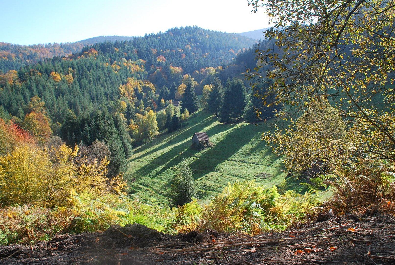 Herbst im Latschigtal