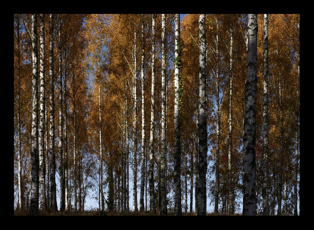 Herbst im Liliental