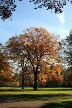 Herbst im Luisenpark