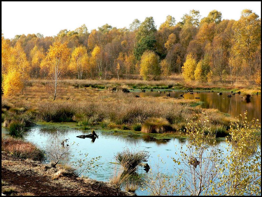 Herbst im Moor