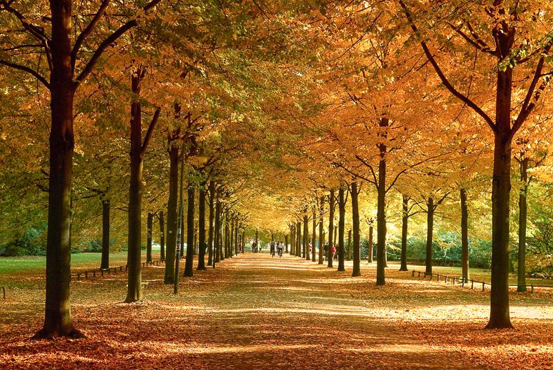 Herbst im Münsterland