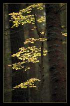 Herbst im Nadelwald
