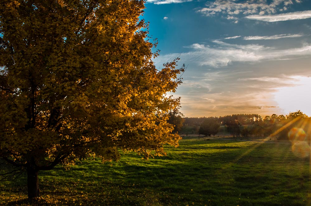 Herbst im Naturschutzgebiet Hainberg