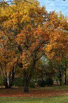 Herbst im Oberhausen 3